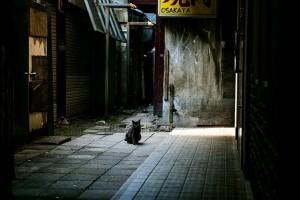 OHT_rojiuranokuroneko500