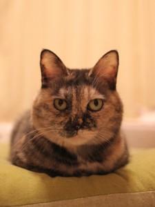 cat-sc-neko_00906