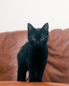 cat-sc-neko_01819