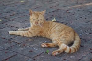 cat-sc-neko_02068