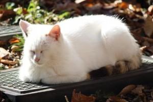 cat-sc-neko_02268