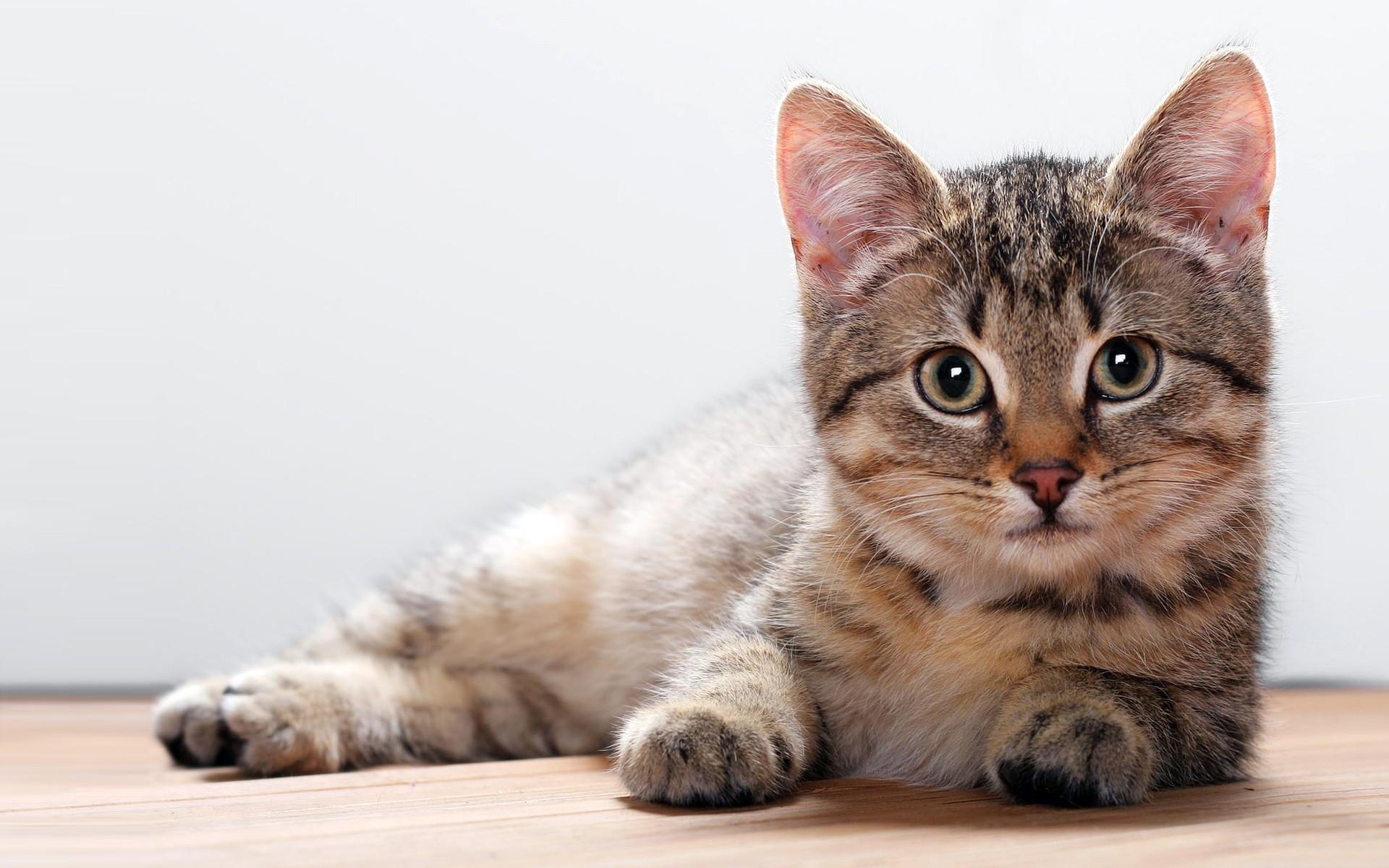 【可愛い可愛い】種類別に見る猫ちゃん【可愛いよねこ可愛い】