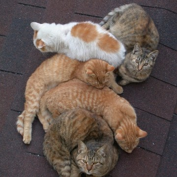 茶トラ猫キジトラ猫の猫画像