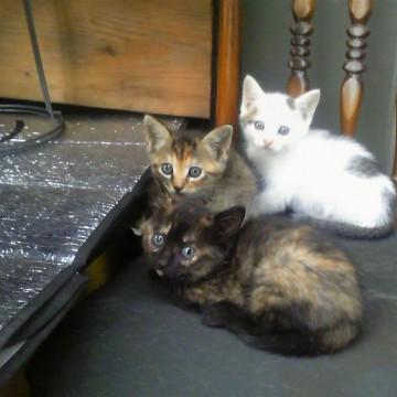 サビ猫キジトラ猫とび三毛猫子猫屋内の猫画像