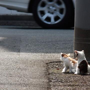 三毛猫とび三毛猫道路の猫画像