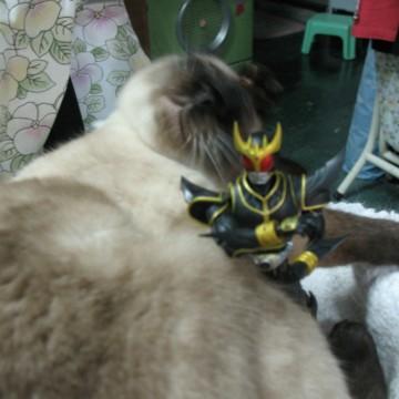 ポインテッド猫仮面ライダーの猫画像