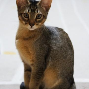 キジトラ猫カーペットの猫画像