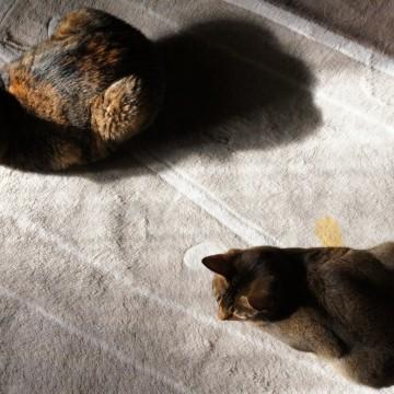 サビ猫カーペットの猫画像
