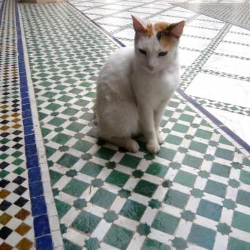 とび三毛猫タイルの猫画像