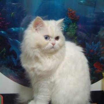 白猫水槽の猫画像