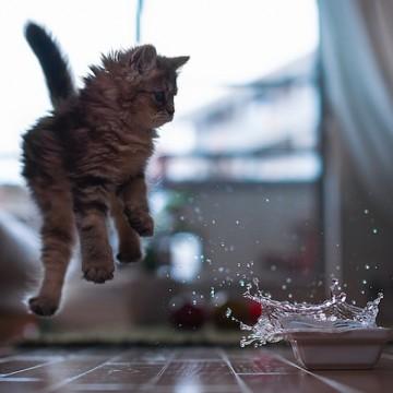キジトラ猫子猫水の猫画像