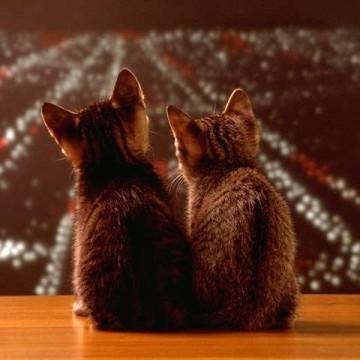 キジトラ猫子猫夜景の猫画像
