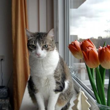 サバトラ白猫窓の猫画像