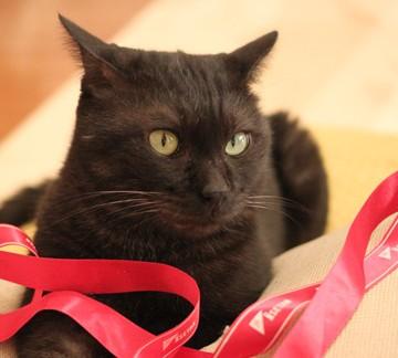 黒猫リボンの猫画像