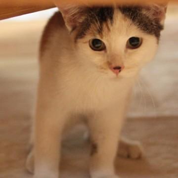 キジトラ白猫カーペットの猫画像
