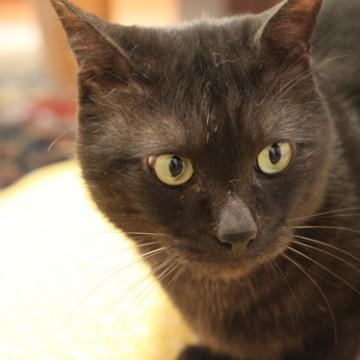 黒猫布団の猫画像