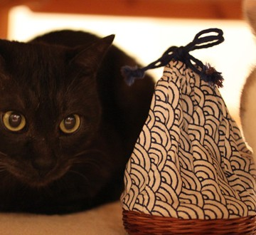 黒猫白猫屋内の猫画像