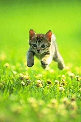 キジトラ猫子猫草原の猫画像