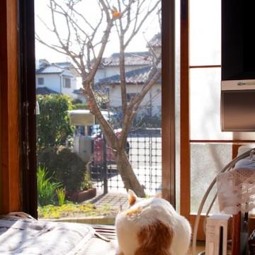 三毛猫畳の猫画像
