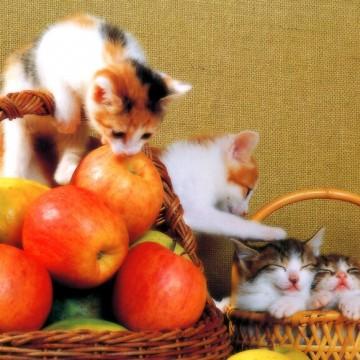 三毛猫茶トラ白猫キジトラ白猫子猫フルーツの猫画像