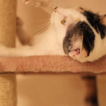黒白猫キャットタワーの猫画像