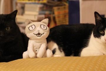 黒猫ハチワレ猫ぬいぐるみの猫画像