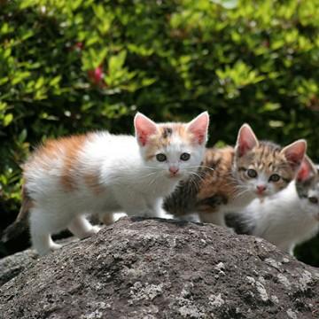 三毛猫サバトラ猫とび三毛猫子猫屋外の猫画像