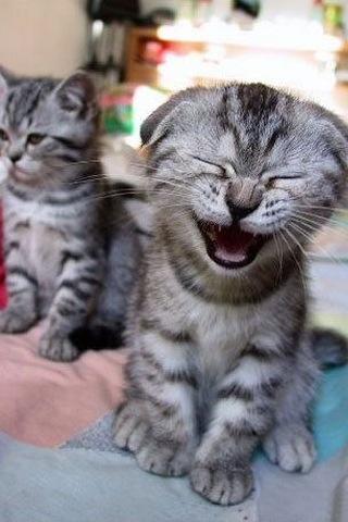 サバトラ猫子猫布団の猫画像