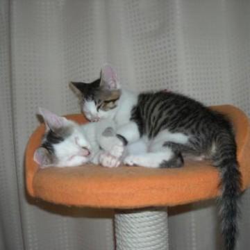とび三毛猫キジトラ白猫キャットタワーの猫画像