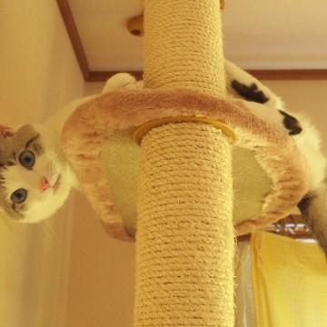 サビ猫キャットタワーの猫画像