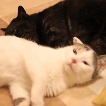 とび三毛猫黒猫屋内の猫画像