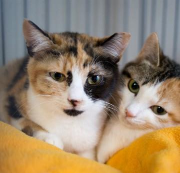 三毛猫檻毛布の猫画像