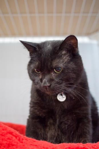 黒猫毛布の猫画像