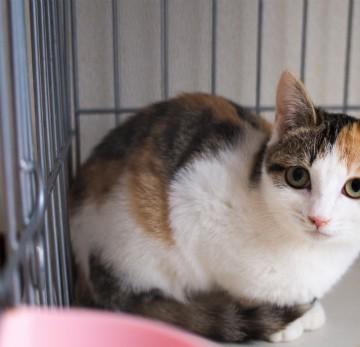 三毛猫檻の猫画像