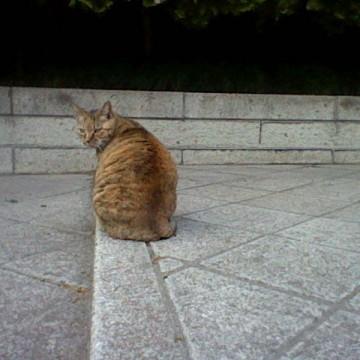 キジトラ猫神社の猫画像