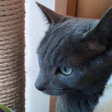 黒猫キャットタワーの猫画像