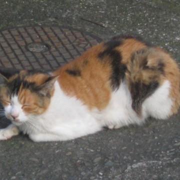 三毛猫マンホールの猫画像