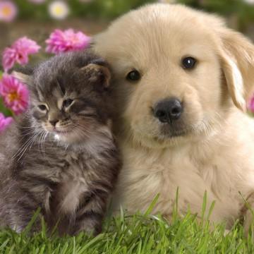 キジトラ猫犬草の猫画像