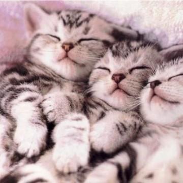 サバトラ猫子猫タオルの猫画像