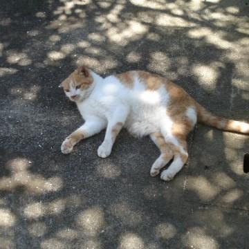 茶トラ白猫屋外の猫画像