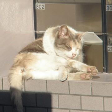 灰白猫屋外の猫画像