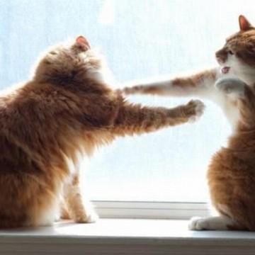 茶トラ猫茶トラ白猫喧嘩の猫画像