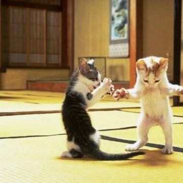 ハチワレ猫とび三毛猫子猫畳の猫画像