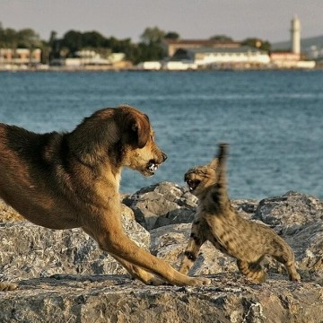 キジトラ猫犬喧嘩の猫画像