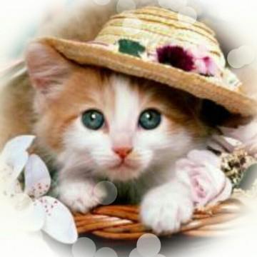 茶トラ白猫子猫帽子の猫画像