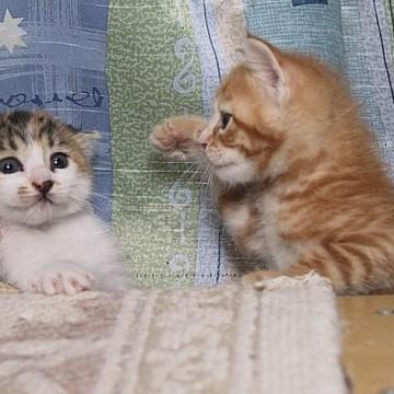 三毛猫茶トラ白猫子猫の猫画像