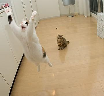 三毛猫キジトラ猫屋内の猫画像