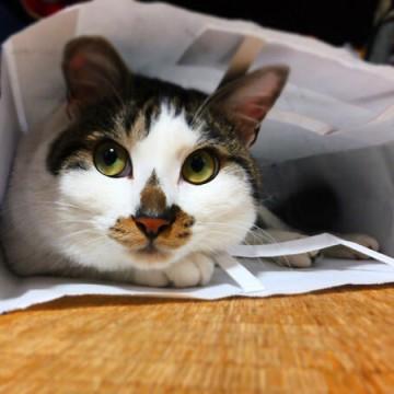 三毛猫袋の猫画像