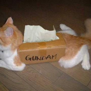 茶トラ白猫GUNDAMの猫画像