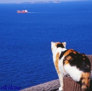 三毛猫海の猫画像